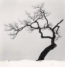 Kussharo Lake Tree, Study 1, Kotan, Hokkaido, Japan, 2002 *