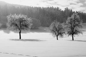 © Rainer Bachmann