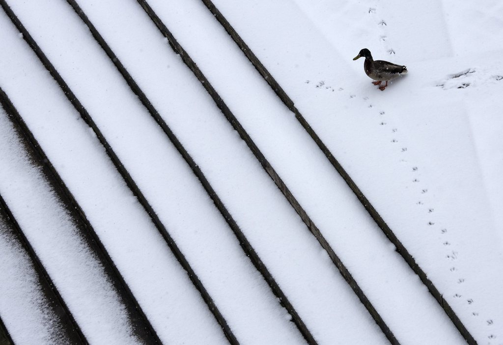 Eine Ente in Paris, Frankreich EPA/IAN LANGSDON