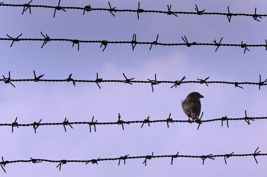 Ein Spatz auf dem Stacheldraht eines Gefängnisses nahe Bukarest,Rumänien EPA/ROBERT GHEMENT