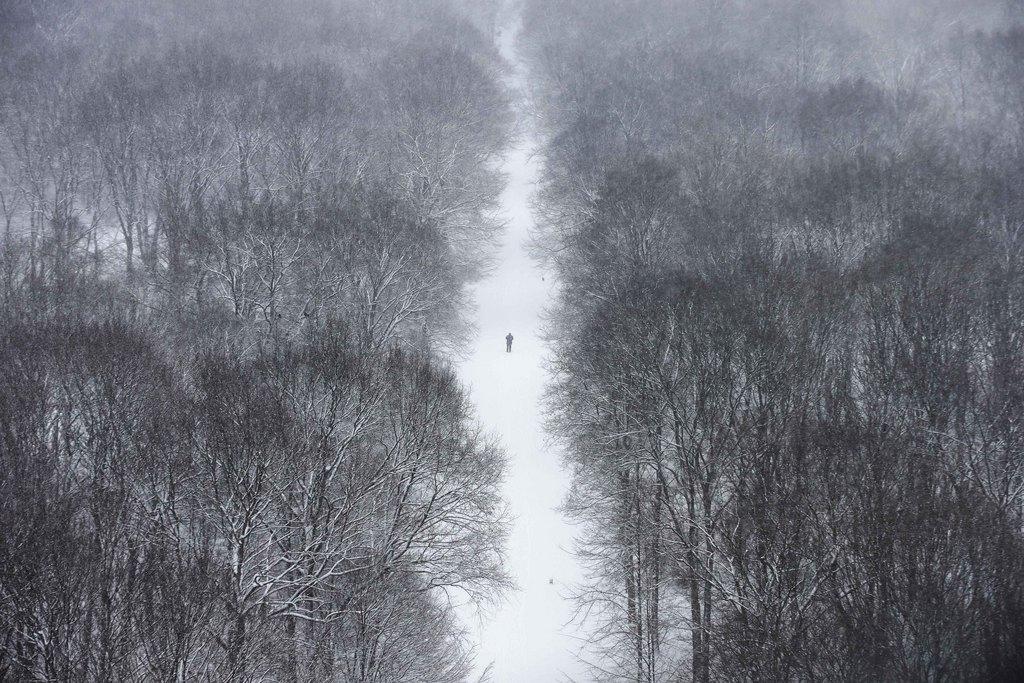 Der Berliner Tiergarten im Schnee  (AP Photo/Markus Schreiber)