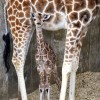 (AP photo/LEO Zoological Conservation Center)