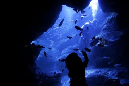 A visit to an aquarium in Tokyo