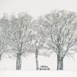 Frühling in Sieversdorf, Deutschland (Keystone/EPA/Patrick Pleul)