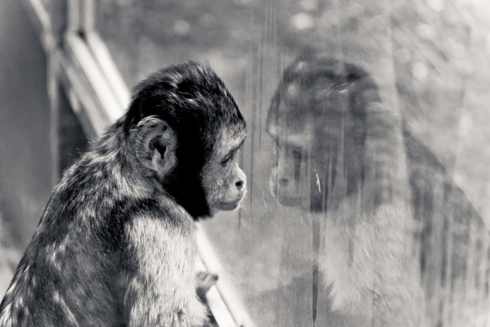 bernard-ksiazek-affe-im-zoo