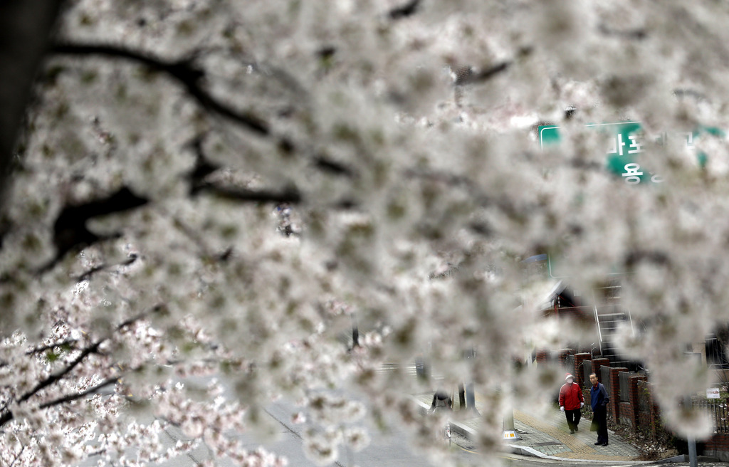 Kirschblüte in Seoul  (AP Photo/Lee Jin-man)