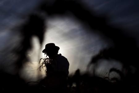 Ernte zum Shavuot Fest in Mevo Horon, Israel (Keystone/AP Photo/Ariel Schalit)