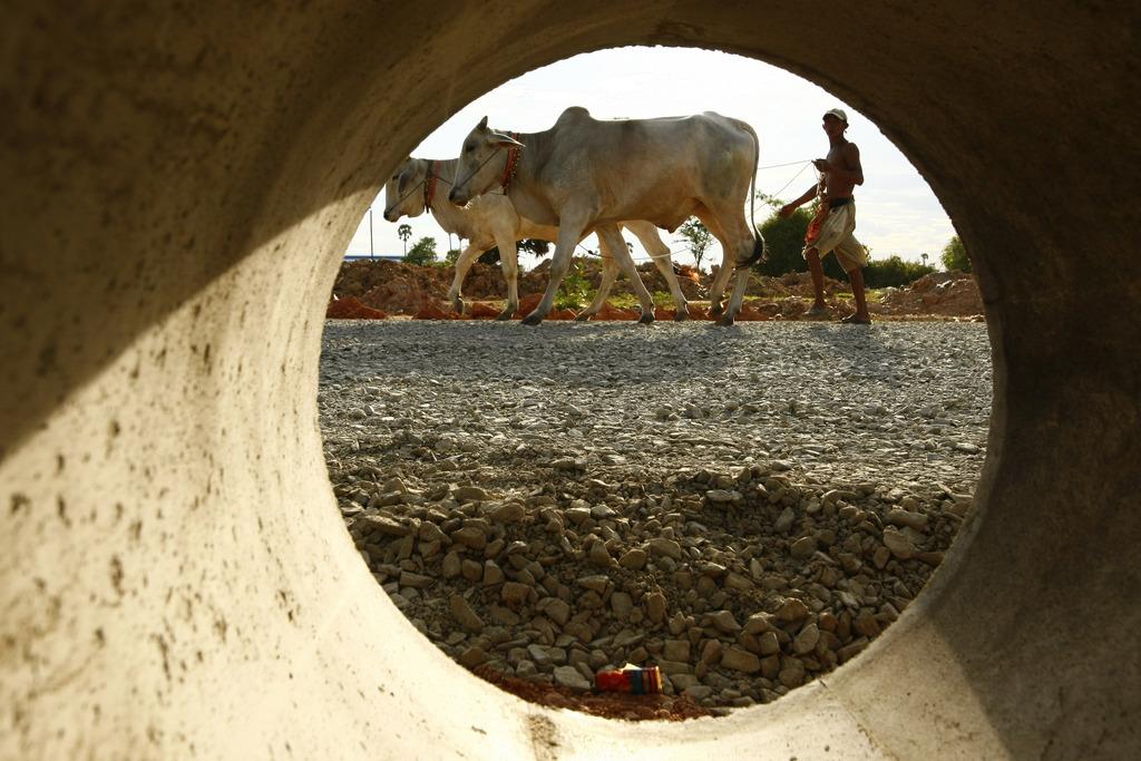 Durchblick: Bauer und Kühe in Kambodscha (AP Photo/Heng Sinith)