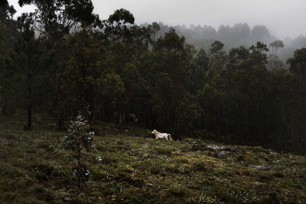 Wildpferd, Mougas, Nordwestspanien (AP Photo/Daniel Ochoa de Olza)