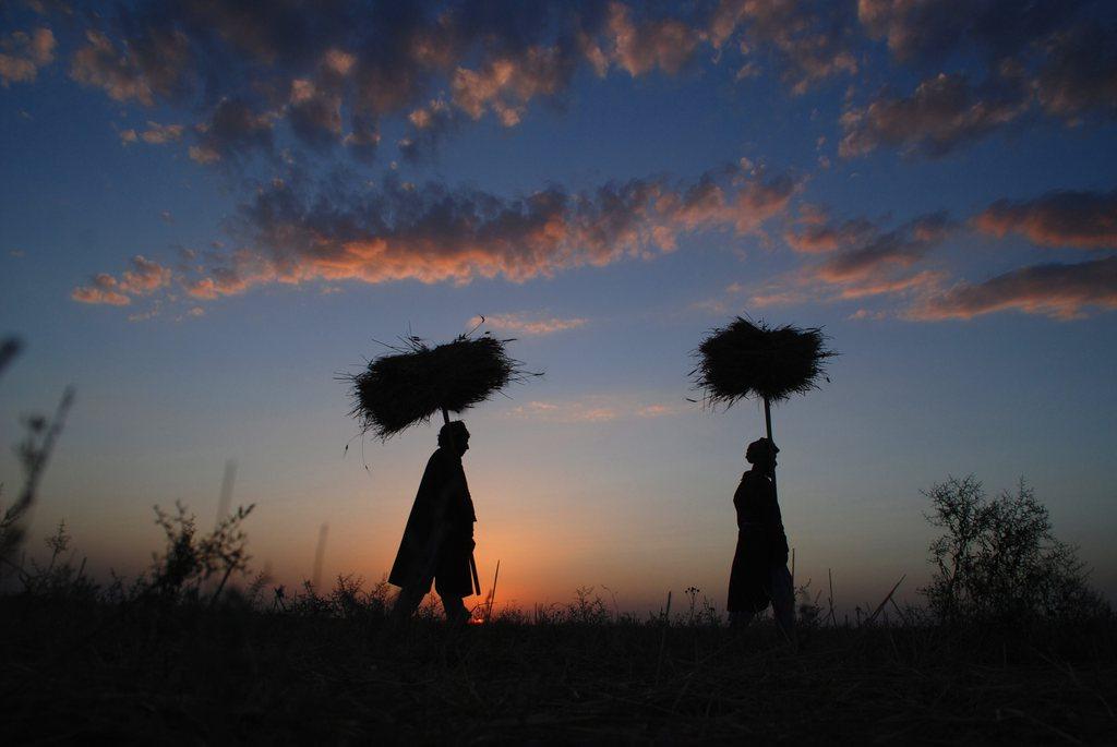 Weizenernte in Mazar-e-Sharif, Afghanistan EPA/SAYED MUSTAFA