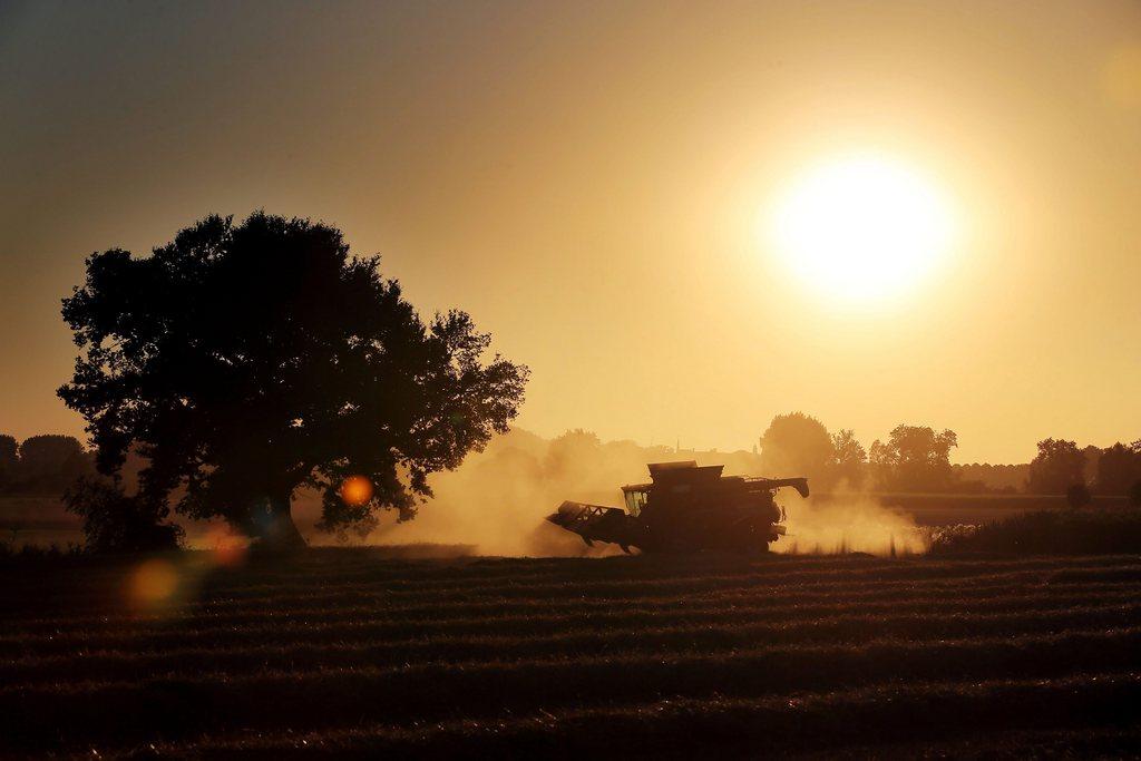 Ernteeinsatz in Rees, Deutschland (Keystone/EPA/Oliver Berg)