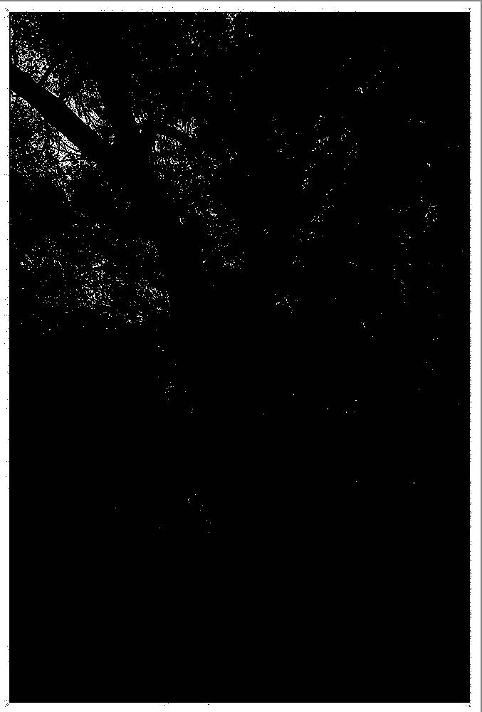 Ausgangsbild: Tonwerte, Lichterbeschnitt