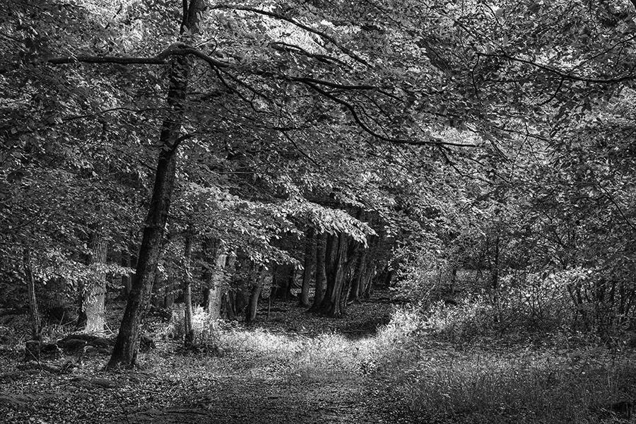 Bild 1 ('Waldeingang bei Zaberfeld')