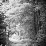 waldfotografie1_plattenwaldpinache