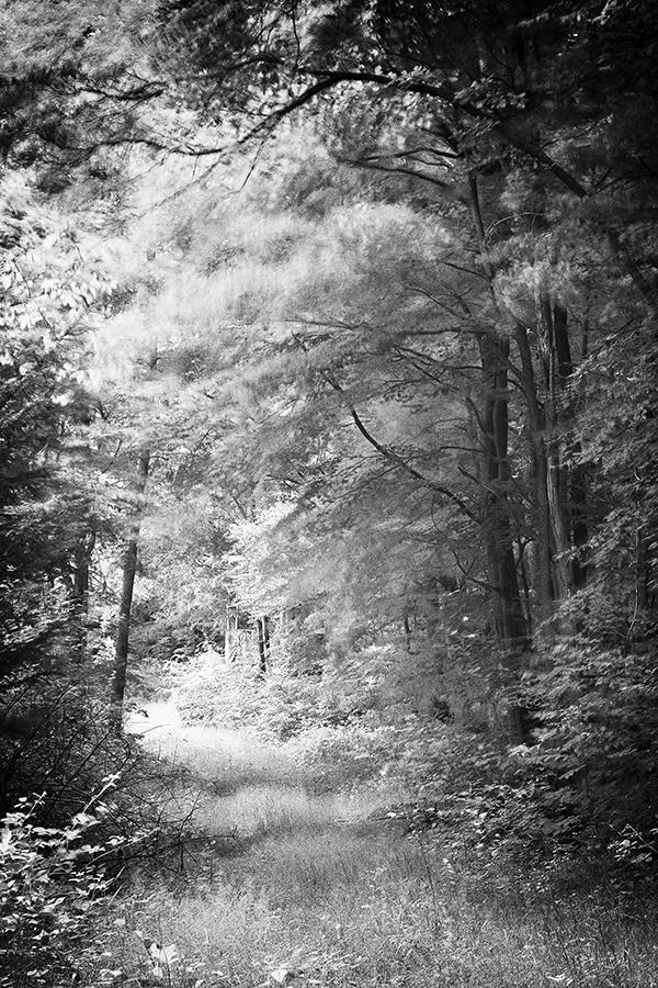 Bild 10 ('Plattenwald bei Pinache')