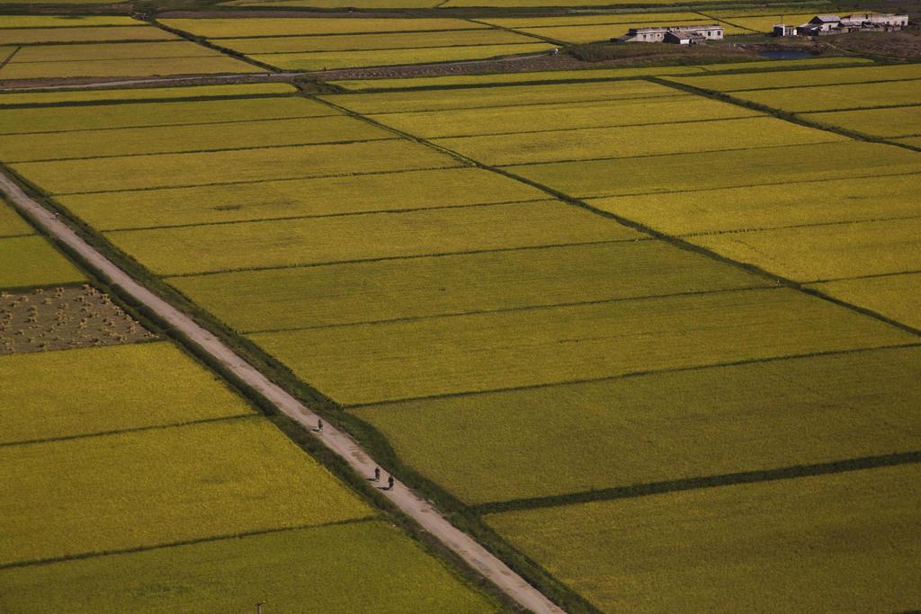 Radler inmitten von Feldern nahe Pjöngjang Nordkorea (AP Photo/David Guttenfelder)