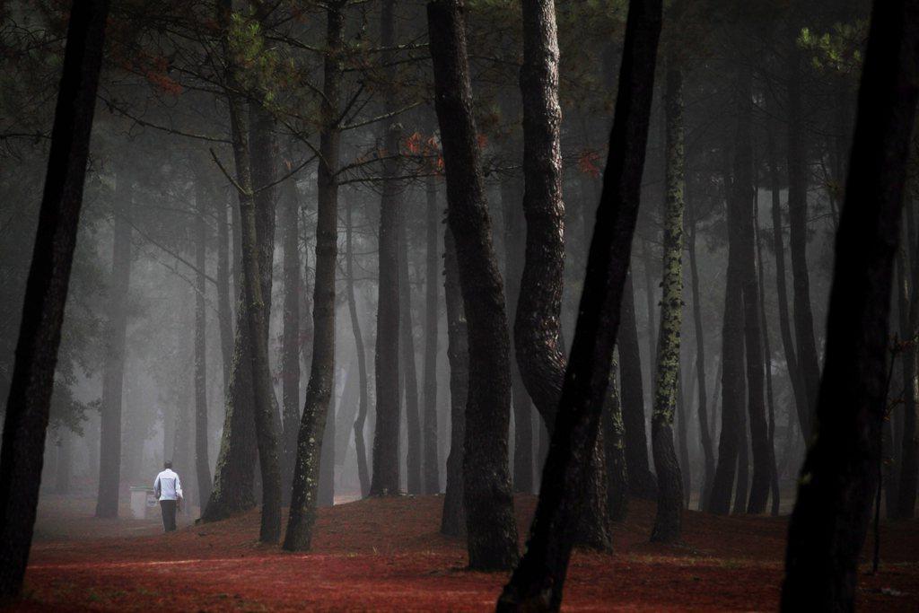 In den Pinienwäldern von Magdalena, Spanien (Keystone/EPA/Cabalar)