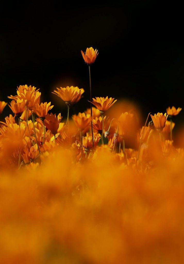 Im Botanischen Garten von Cape Town, Südafrika (Keystone/EPA/Nic Botha)
