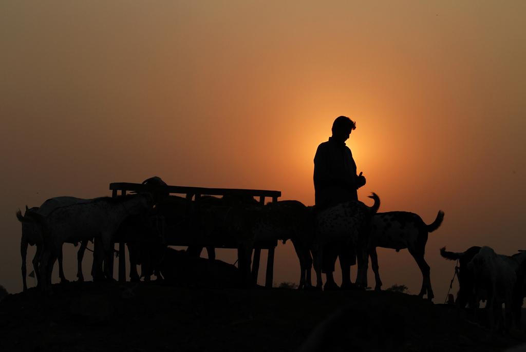 Ein Ziegenhändler in den Vororsten von Islamabad, Pakistan (Keystone/AP Photo/Anjum Naveed)