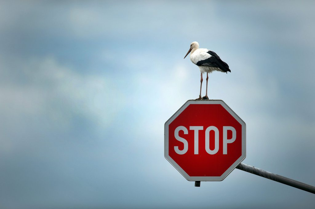 Storch auf Stopp-Schild nahe Immerath D EPA/FEDERICO GAMBARINI