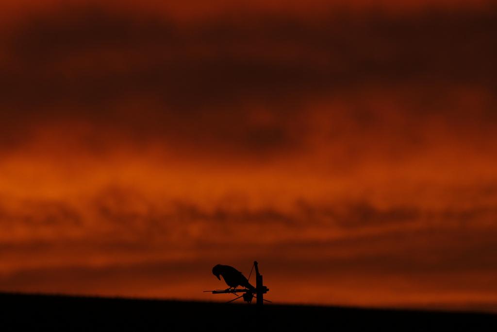 Krähe bei Sonnenuntergang in Berlin, Deutschland (Keystone/AP Photo/Markus Schreiber)