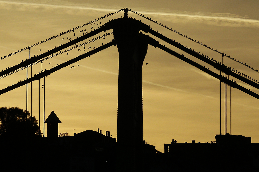 Vögel sitzen im Sonnenuntergang auf einer Brücke, Pittburgh Pa. USA (AP Photo/Gene J. Puskar)