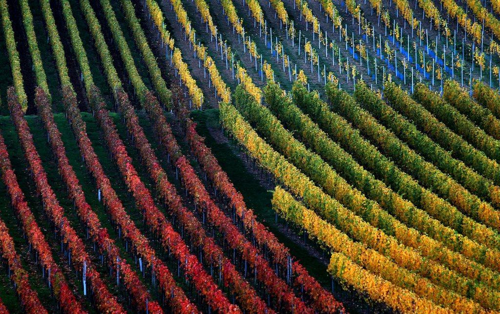 Weinberg im Herbst in Marktbreit, Deutschland (Keystone/EPA/Karl-Josef Hildenbrand)