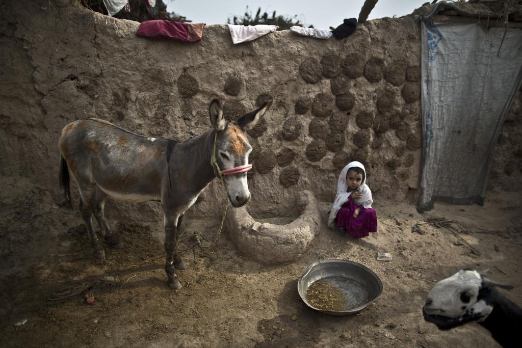 Afghanisches Flüchtlingskind in einer fast biblischen Szene am Rand von Islamabad Pakistan (AP Photo/Muhammed Muheisen)