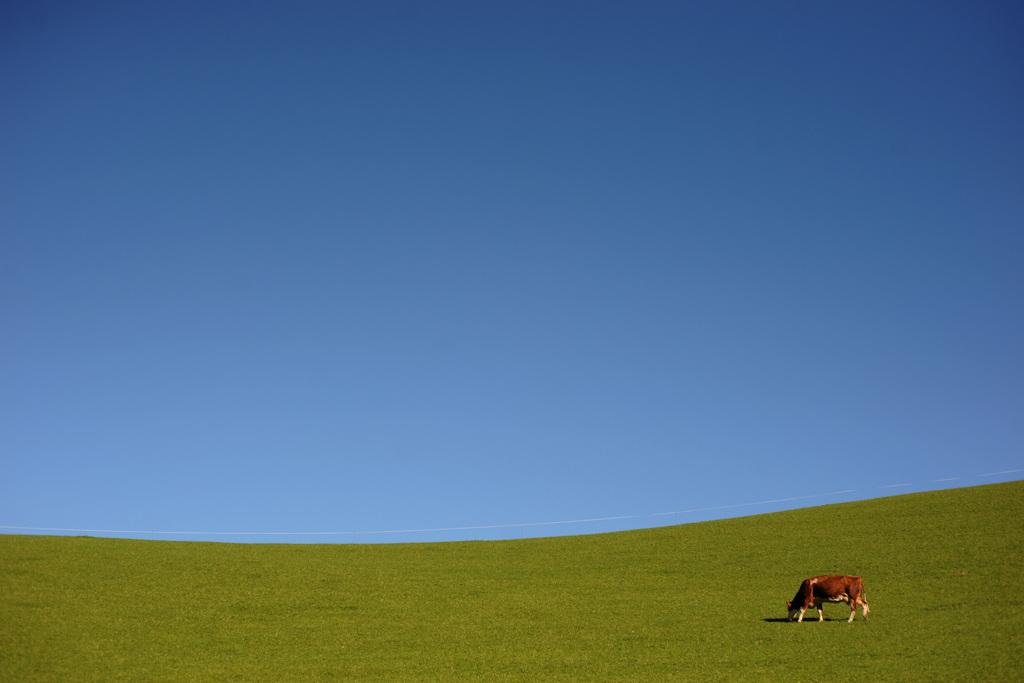 Auf der Weide in St. Kohlmann, Österreich (Keystone/APA-Foto/Barbara Gindl)