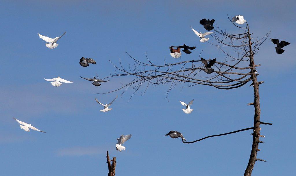 Tauben über entlaubten Bäumen,