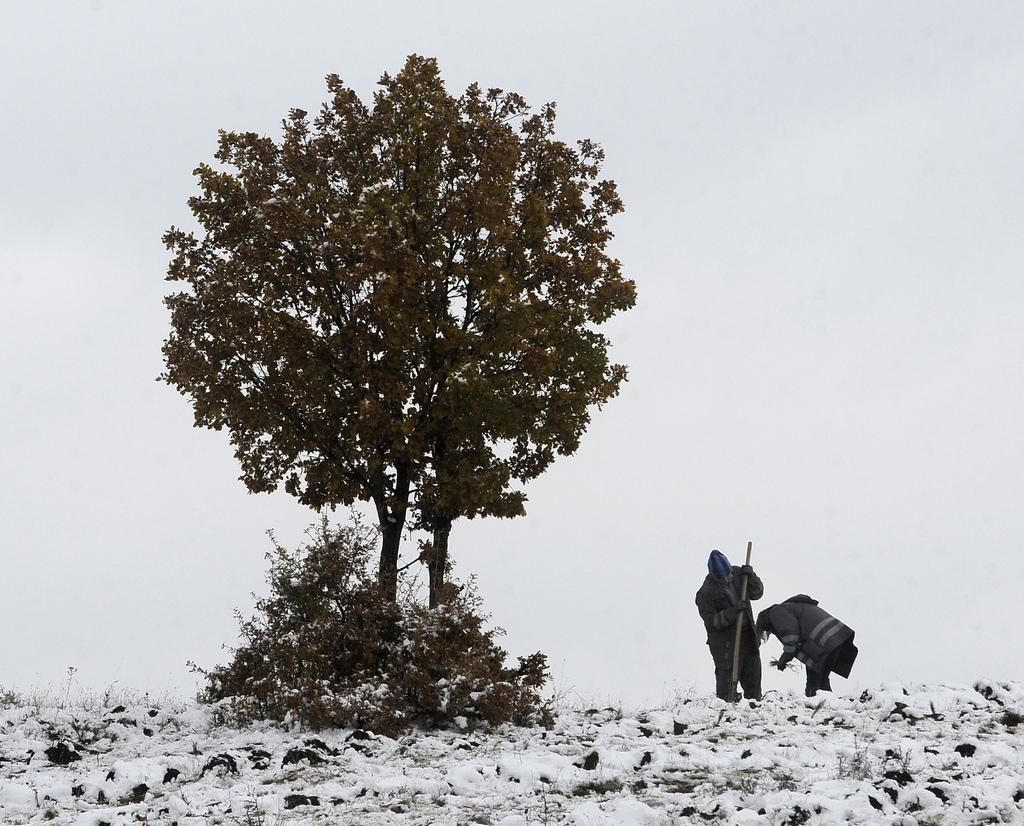 Ein neuer Baum wird gepflanzt in Skopje, Mazedonien (Keystone/AP Photo/Boris Grdanoski)