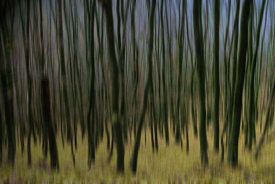 Bild 8 (Rosel Eckstein / Pixelio)