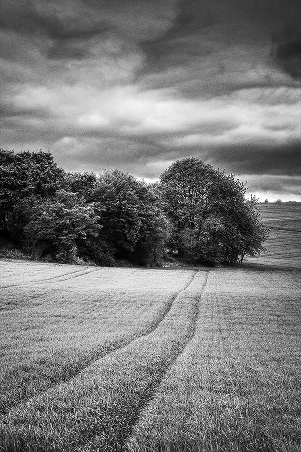 Bild 13 ('Felder bei Eisingen')