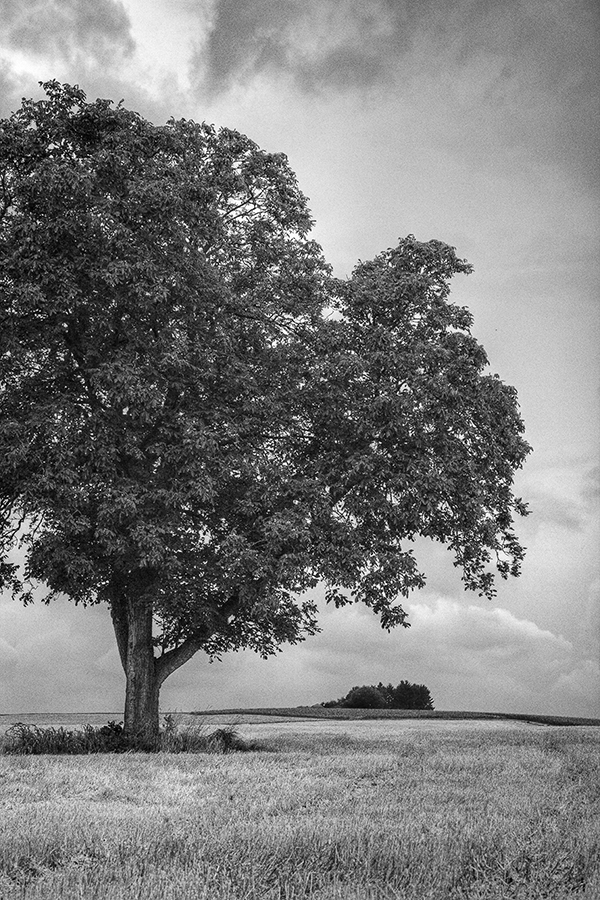 Bild 14 ('Landschaft bei Gondelsheim')