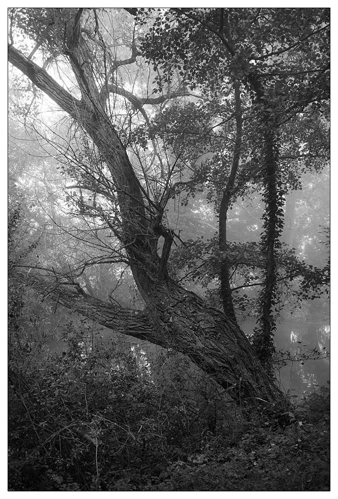 Bild 16 ('Herbstanfang' von Matthias Binder)