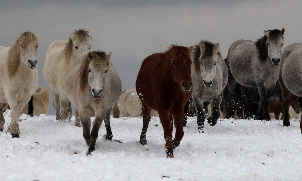 Pferde in Südkorea EPA/JEON HEON-KYUN
