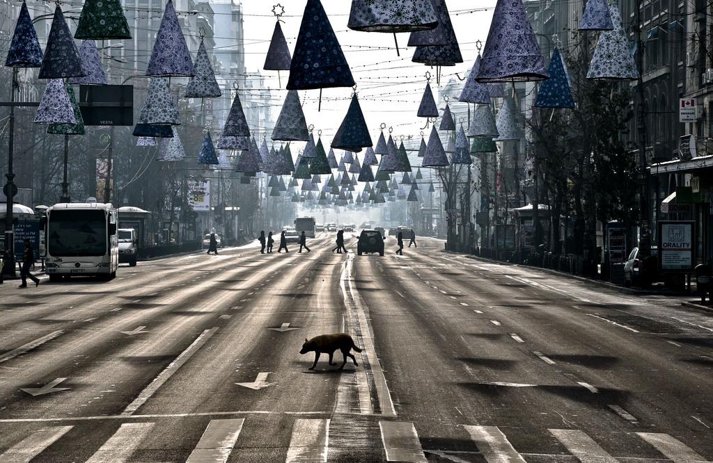 Straßenszene in Bukarest, Rumänien (AP Photo/Vadim Ghirda, Archiv)