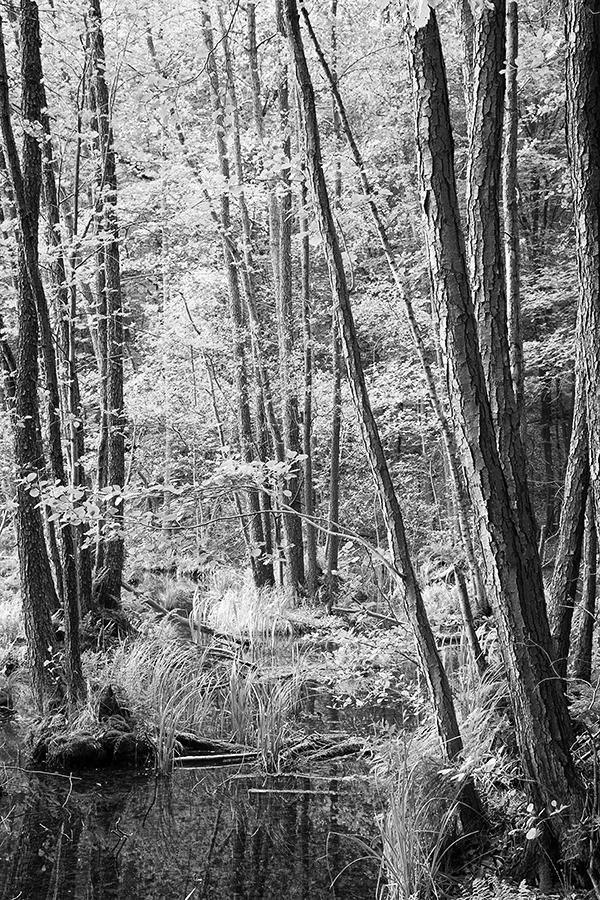 Bild 19 ('Auenwald am Kleinen Däbersee', Normal)