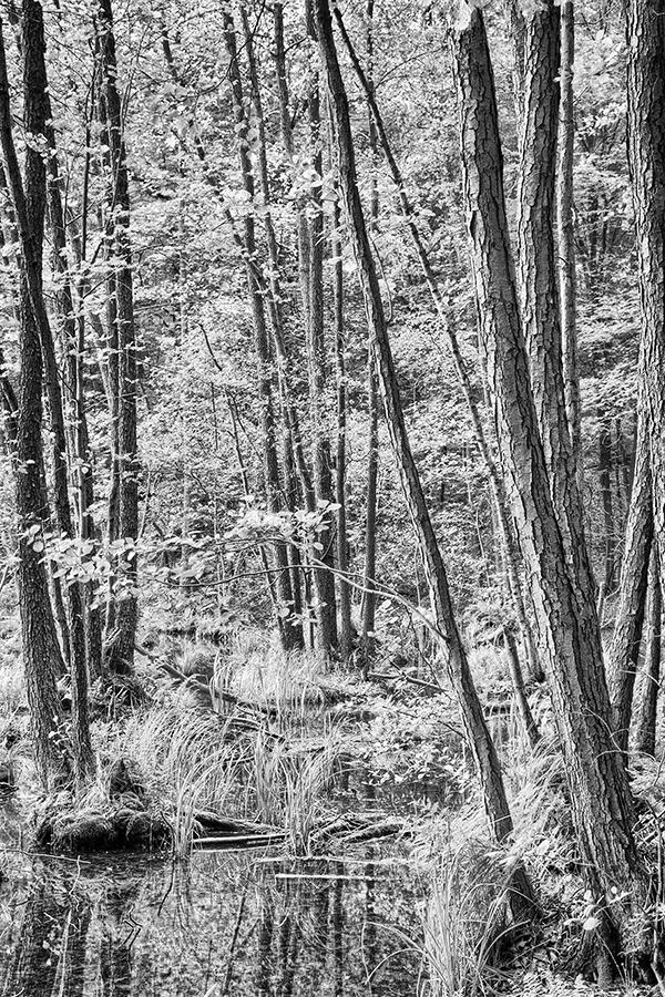 Bild 20 ('Auenwald am Kleinen Däbersee', HDR)