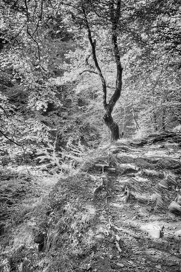 Bild 3 ('Gorges d'Holzarté nahe Pic d'Orhy')