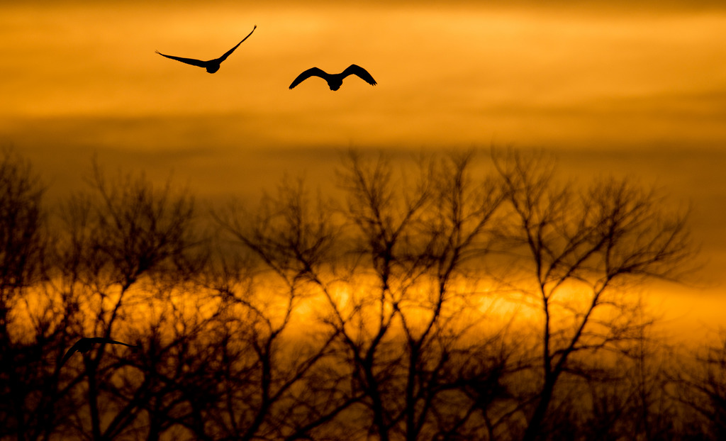 Wildgänse im Licht des Sonnenaufgangs nahe Harkenbleck, Norddeutschland  (AP Photo/dpa, Julian Stratenschulte)