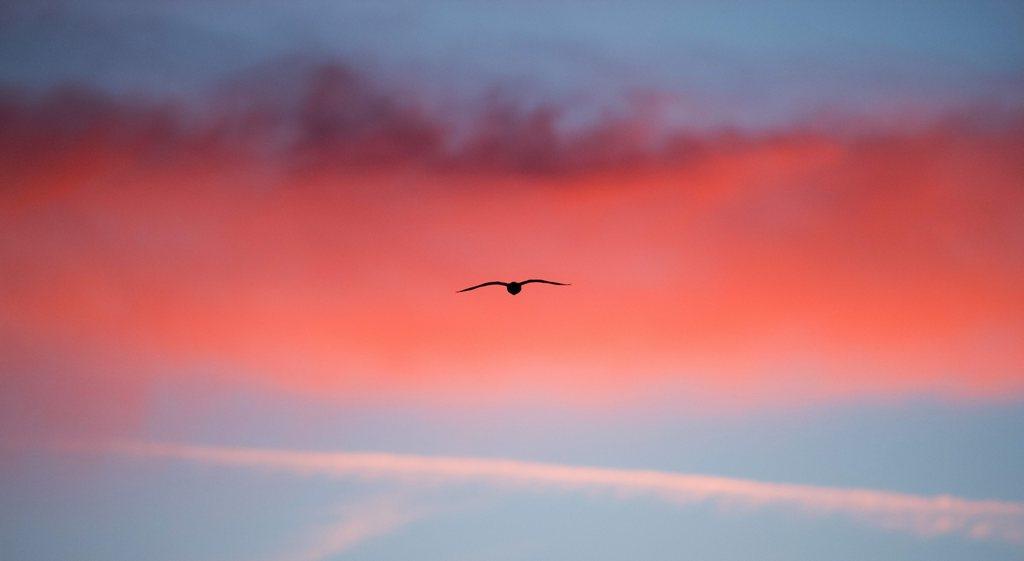 Morgenhimmel mit Vogel in Hannover D  EPA/JULIAN STRATENSCHULTE