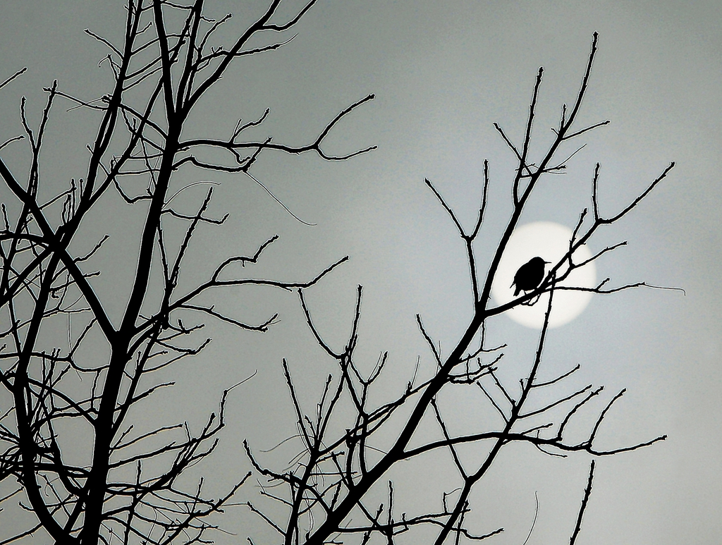 Sonnenaufgang mit Vogel in Alton, Ill. USA (AP Photo/The Telegraph, John Badman)