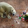 SINGAPORE POLAR BEAR BIRTHDAY