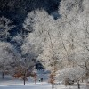 Winterlandschaft in Washington, USA (Keystone/EPA/Michael Reynolds)