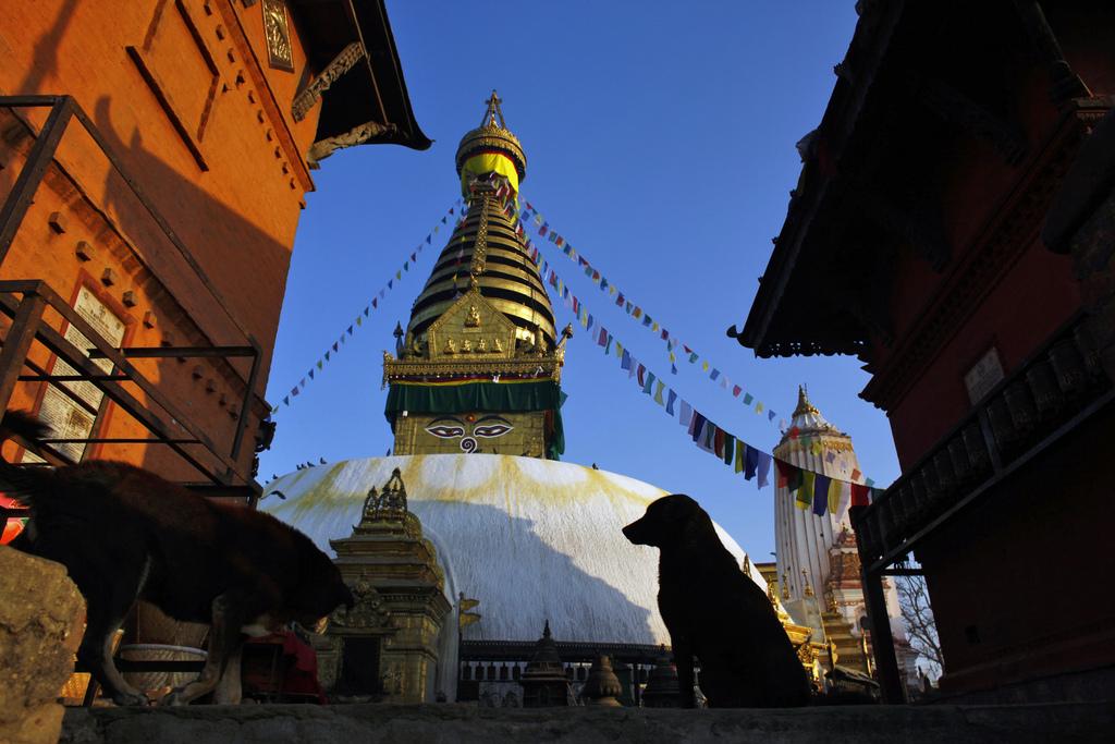 Hunde in einer Stupa, Katmandu Nepal  (AP Photo/Niranjan Shrestha)