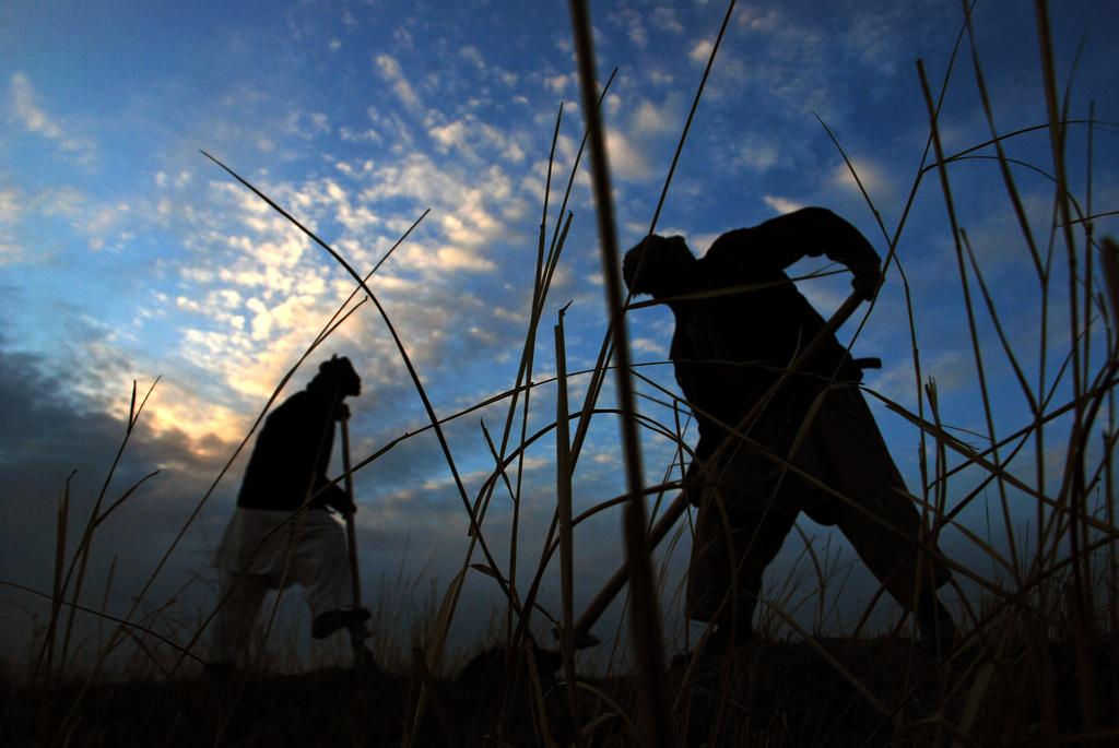 Feldarbeit in Mazar-e-Sharif, Afghanistan (AP Photo/Mustafa Najafizada, Archiv)