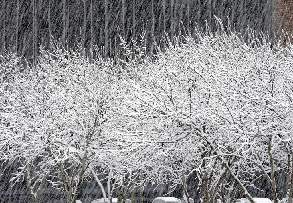 Grafischer Schnee in Chapel Hill, USA (Keystone/AP Photo/Gerry Broome)