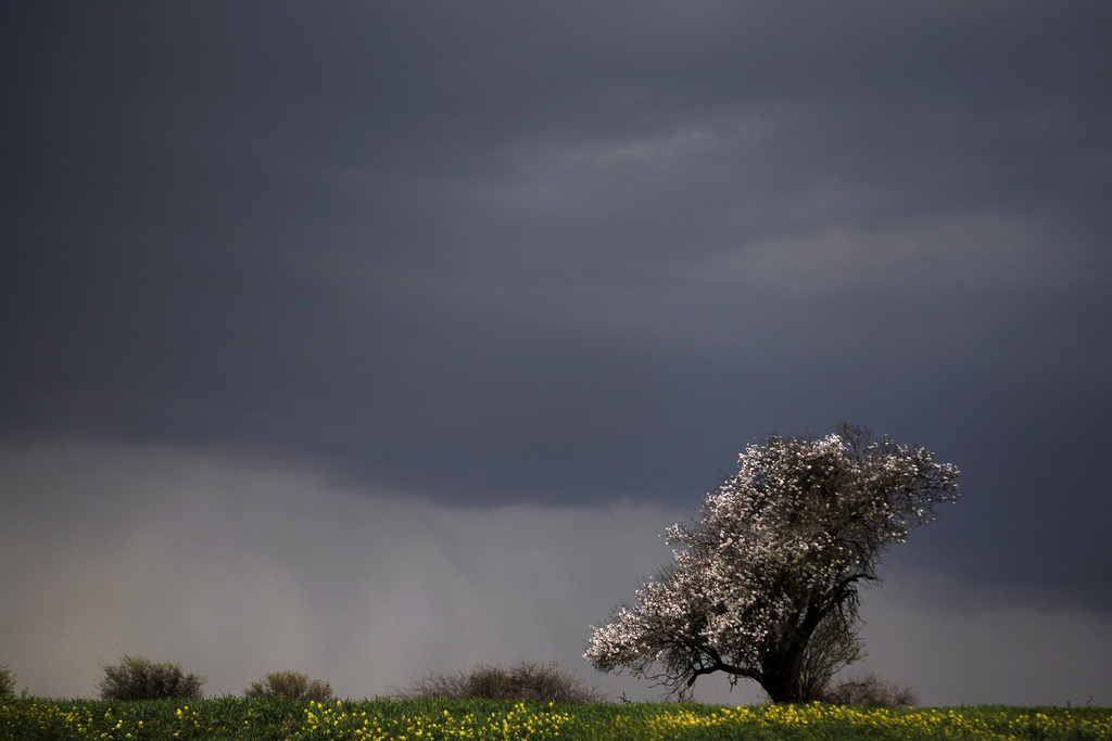 Frühe Blüte bei Krini, Zypern (Keystone/AP Photo/Petros Karadjias)
