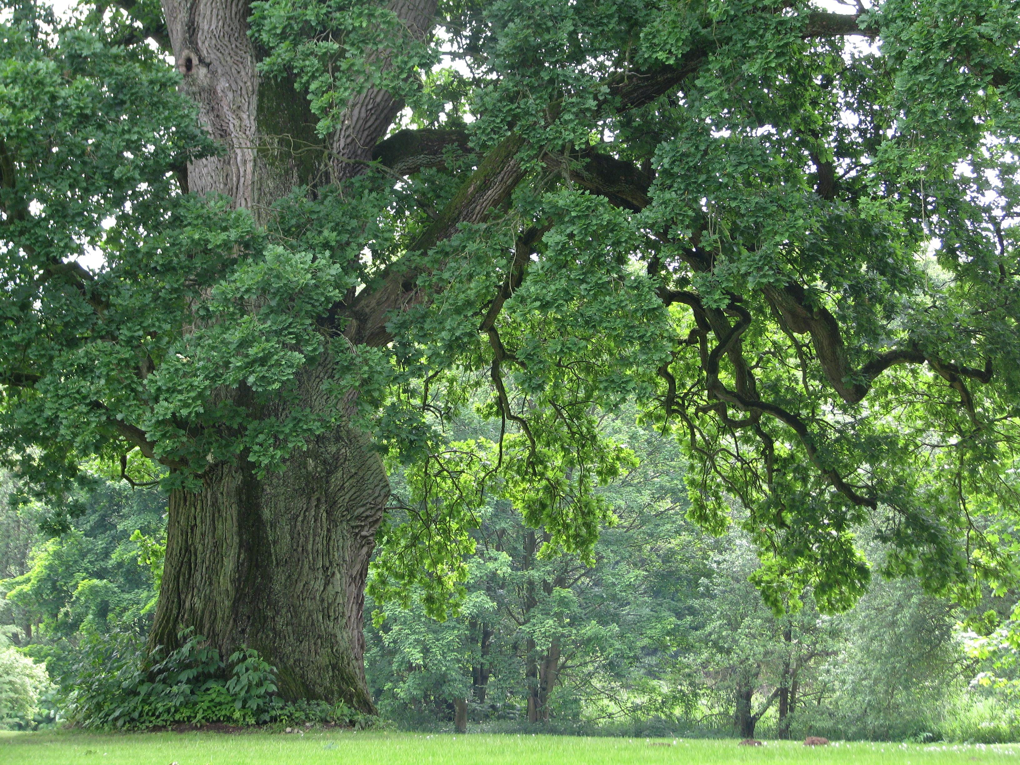 Bildkritik Eichenporträt: Schönheit am Rande des Waldes